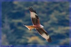 2015-meiringen-axalp-hornet-puma-105